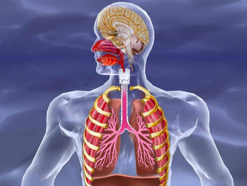 BVMed - Bundesverband Medizintechnologie - Atemwege & Lunge