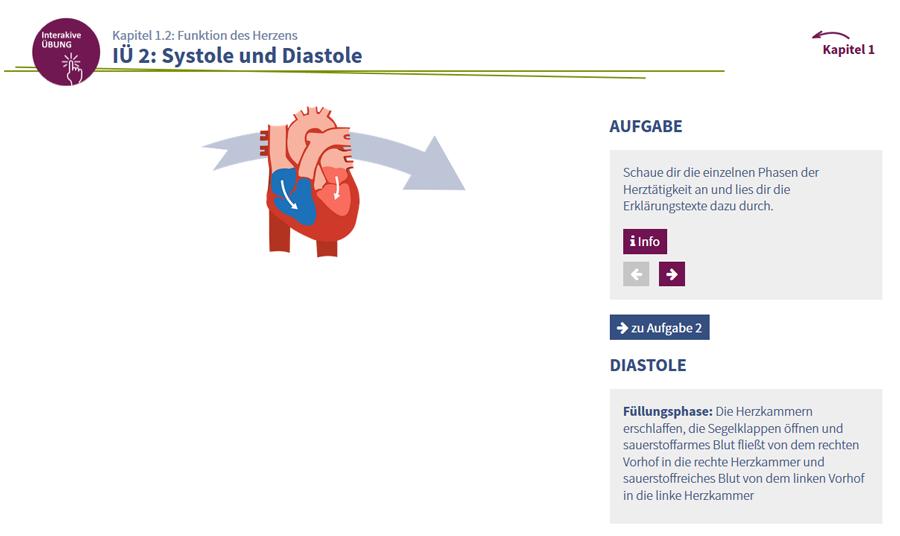 Fein Funktion Des Herzens Fotos - Menschliche Anatomie Bilder ...