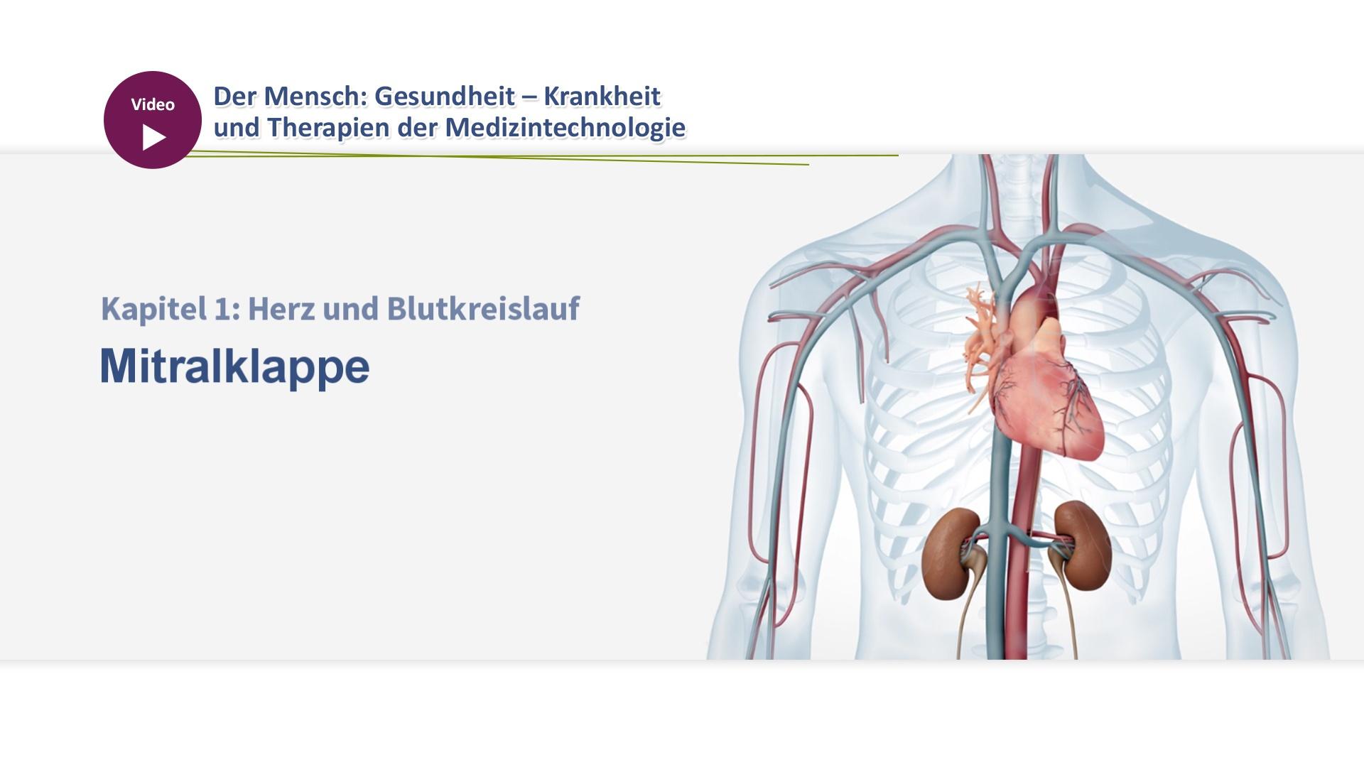 Niedlich Gesichtsnervenbahn Anatomie Bilder - Anatomie Ideen ...