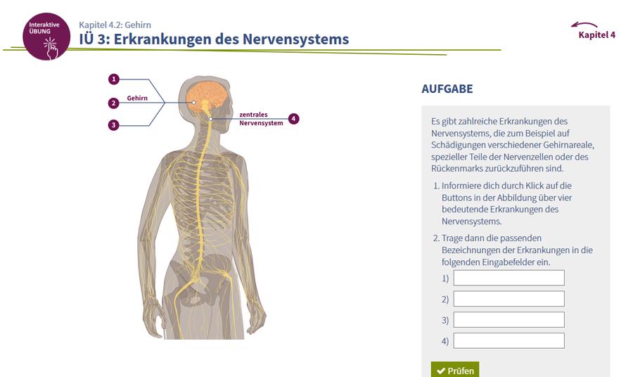 Der Mensch: Gesundheit und Krankheit – Therapien der Medizintechnologie